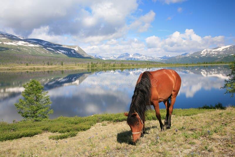 Paard dichtbij bergmeer stock foto