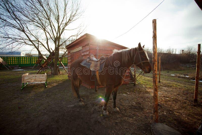 Paard dichtbij een smidswerkruimte stock fotografie