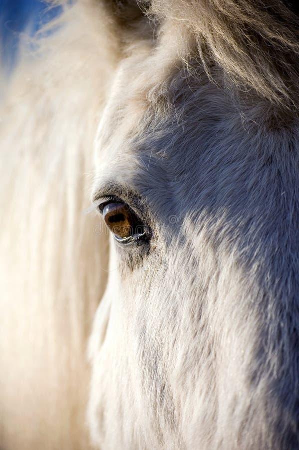 Paard dichte omhooggaand van het hoofd en het oog stock afbeeldingen