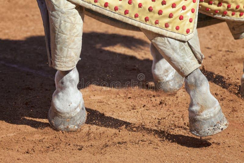 Paard die aan een stieregevecht werken stock afbeeldingen