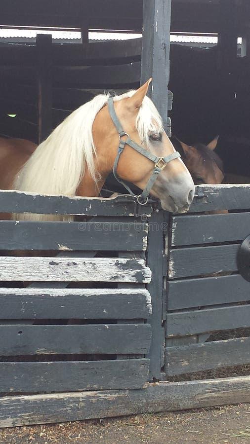 Paard die bij box wachten stock afbeeldingen
