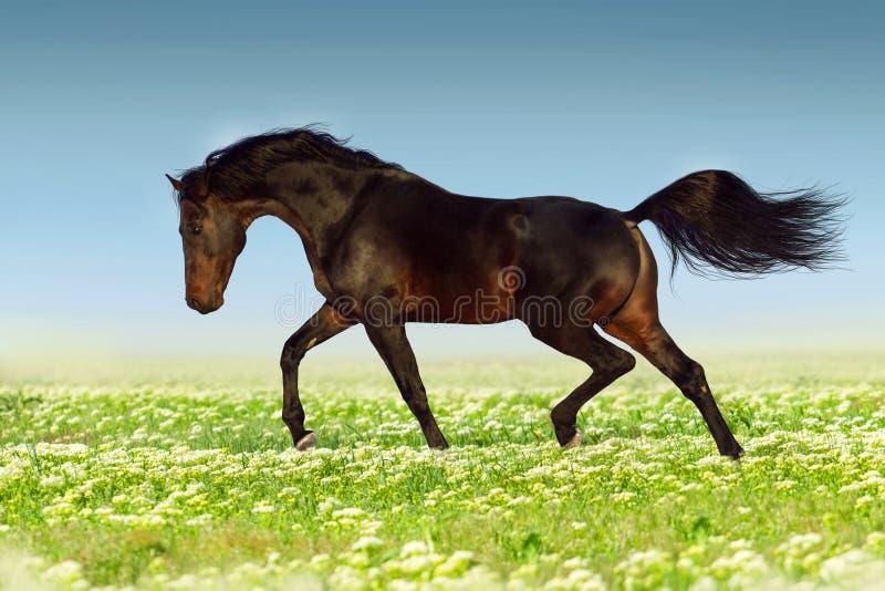 Paard die in bloemen draven stock fotografie