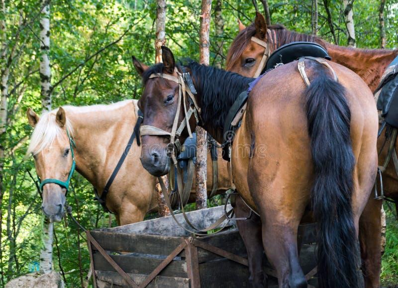 Paard die de camera bekijken, backview royalty-vrije stock afbeeldingen