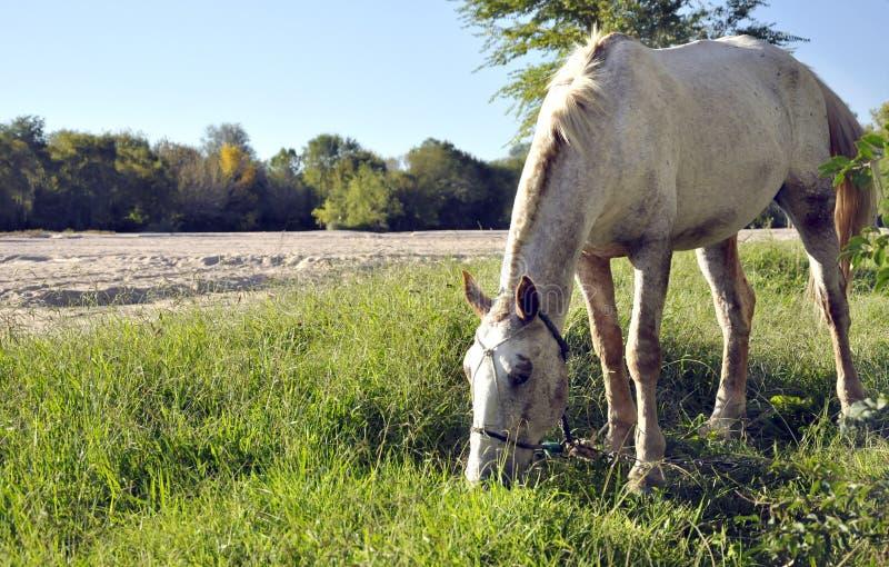 Paard die dichtbij de rivier eten stock afbeeldingen