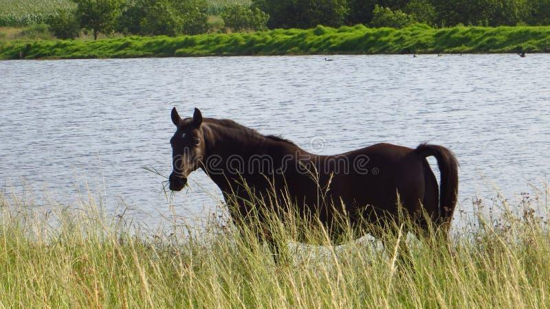 Paard die door de Dam eten royalty-vrije stock afbeelding