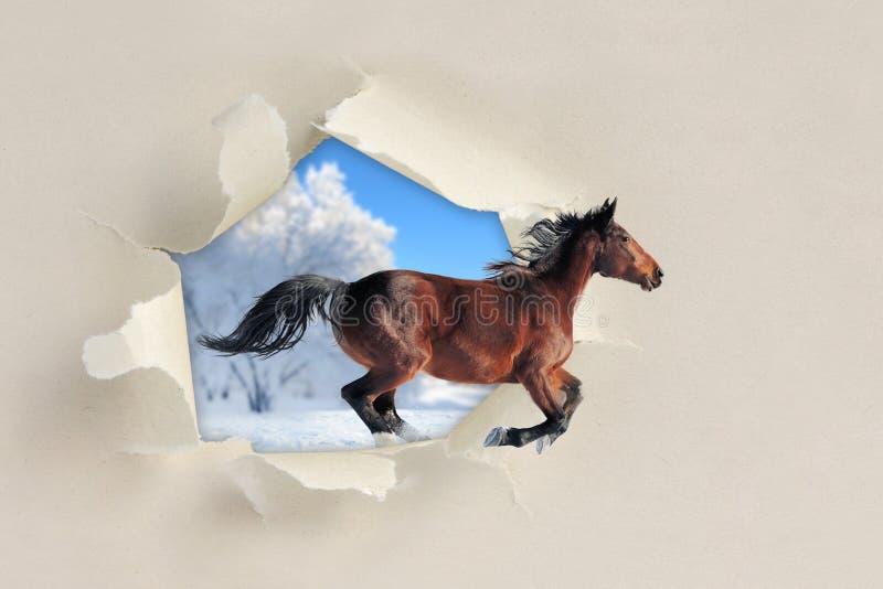 Paard die een gescheurd gat het document doornemen stock afbeeldingen