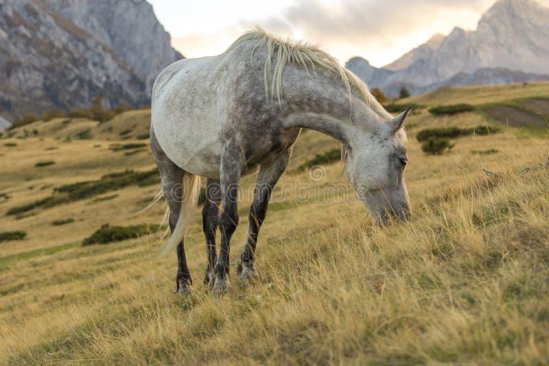 Paard die gras in de wildernis eten stock foto's