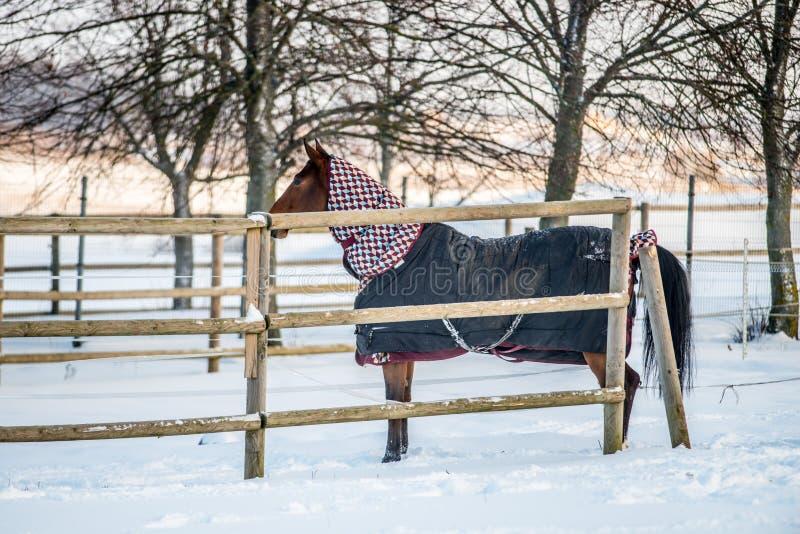 Paard die kleren in de winter dragen royalty-vrije stock fotografie