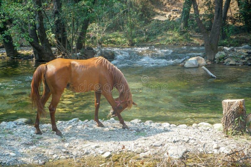 Paard die rond het water lopen royalty-vrije stock afbeelding