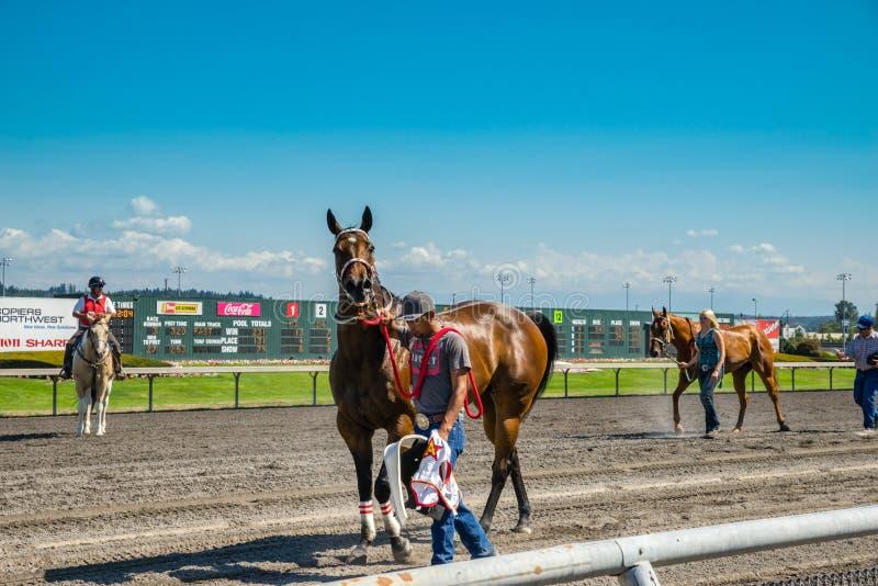 Paard die terug naar stal na ras in Emerald Downs worden genomen stock foto