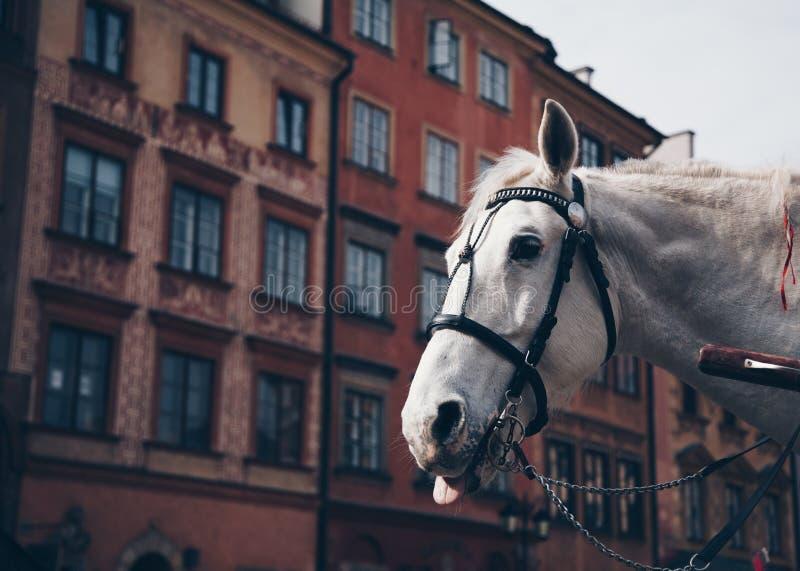 Paard die uit Zijn Tong in de Oude Stad, Warshau, Polen plakken stock fotografie
