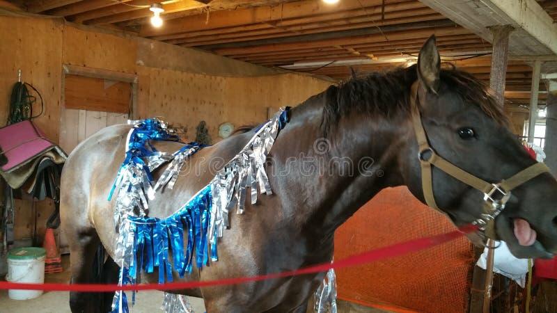 Paard die uit zijn tong plakken royalty-vrije stock fotografie