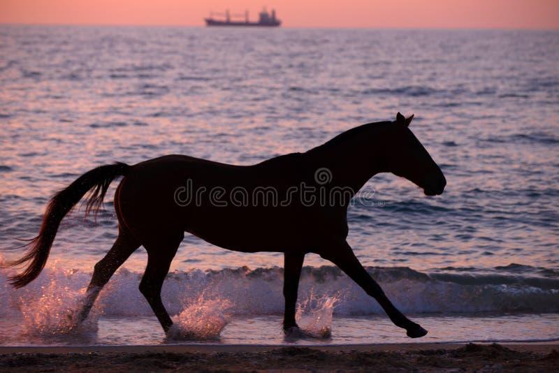 Paard die water doornemen stock afbeeldingen