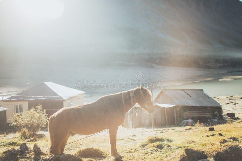 Paard die zich in Altay Mountains bevinden royalty-vrije stock foto's