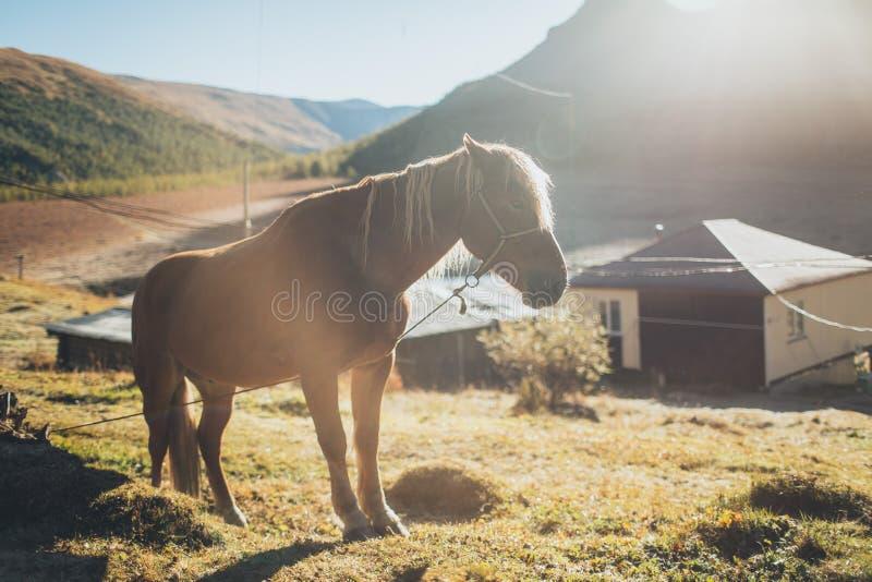 Paard die zich in Altay Mountains bevinden royalty-vrije stock foto