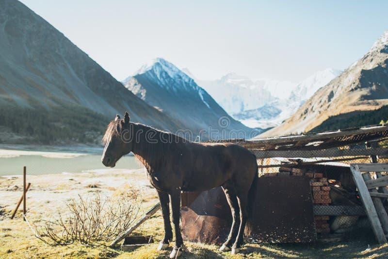 Paard die zich in Altay Mountains bevinden royalty-vrije stock fotografie