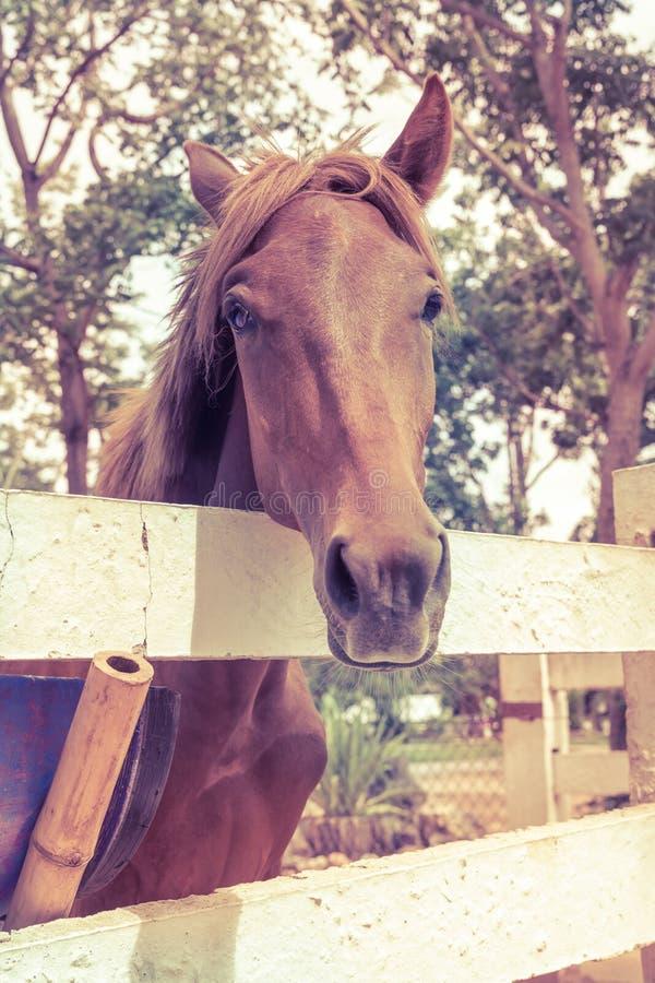 Paard die zich op de witte van de piketomheining en aard achtergrond bevinden royalty-vrije stock foto's