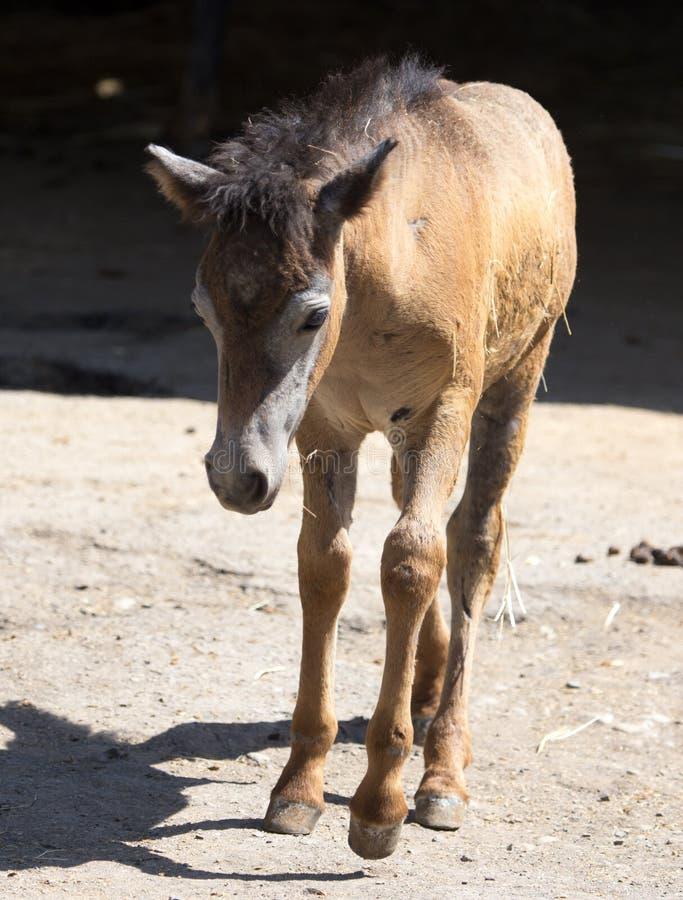 Paard in dierentuin stock afbeeldingen