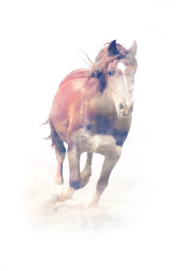 Paard Dubbele blootstelling royalty-vrije stock fotografie