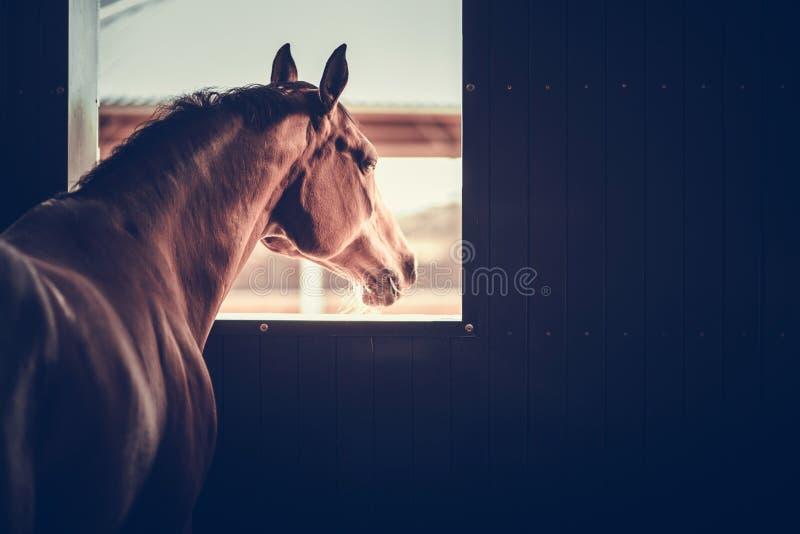 Paard in een Stabiele Doos stock afbeelding