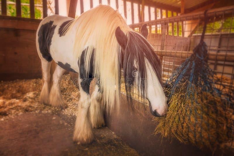 Paard in een stal royalty-vrije stock afbeelding