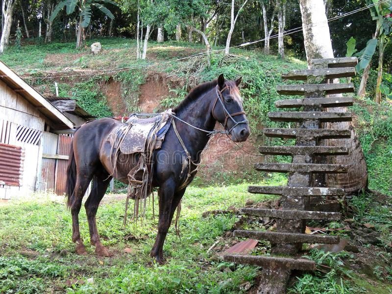 Paard in El Castillo Nicaragua royalty-vrije stock afbeeldingen