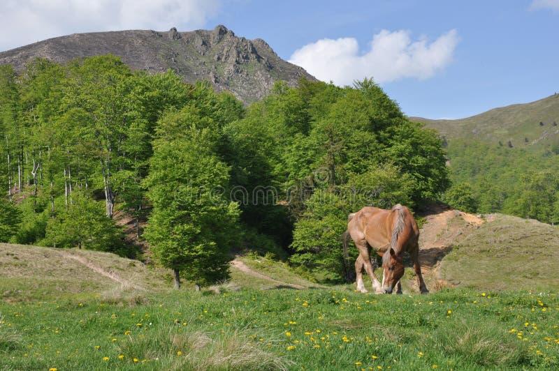 Paard en berg stock afbeelding