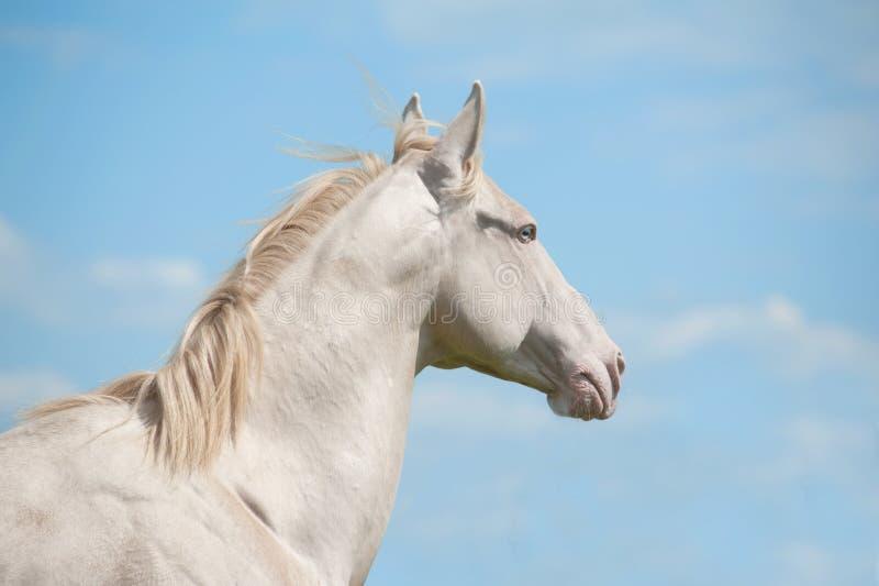Paard en hemel royalty-vrije stock afbeeldingen