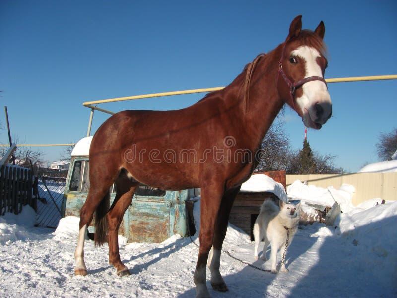 Paard en hond stock afbeeldingen
