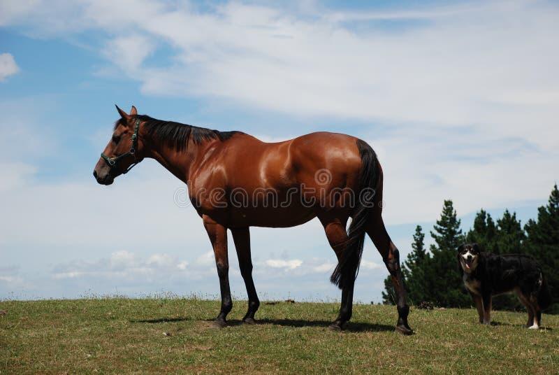 Paard en hond in paddock royalty-vrije stock afbeelding