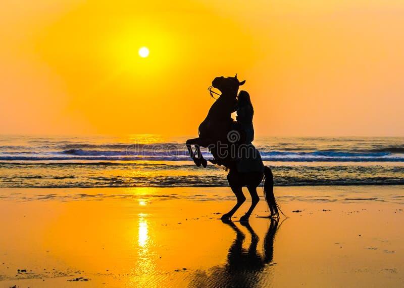 Paard en ruiter die de gouden zon begroeten stock foto's