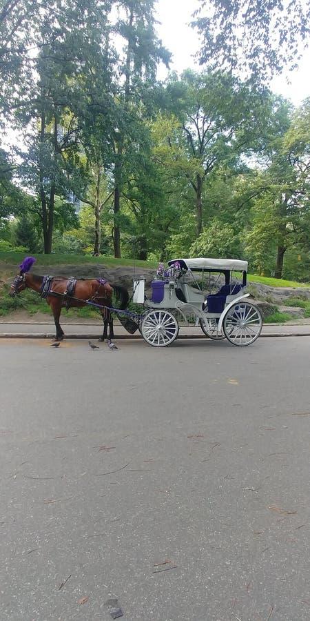 Paard en vervoer in Central Park op een mooie zonnige augustus-dag royalty-vrije stock afbeelding