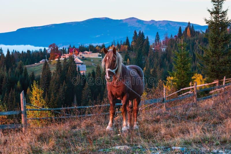 Paard en vroeg Karpatisch de bergdorp van de ochtendherfst, Ukra stock fotografie