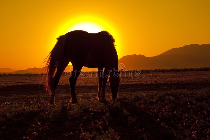 Paard en zon stock afbeelding
