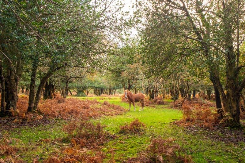 Paard in Forest Clearing royalty-vrije stock afbeeldingen