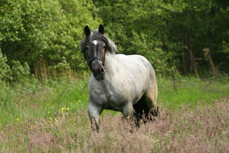 Paard in galop royalty-vrije stock fotografie