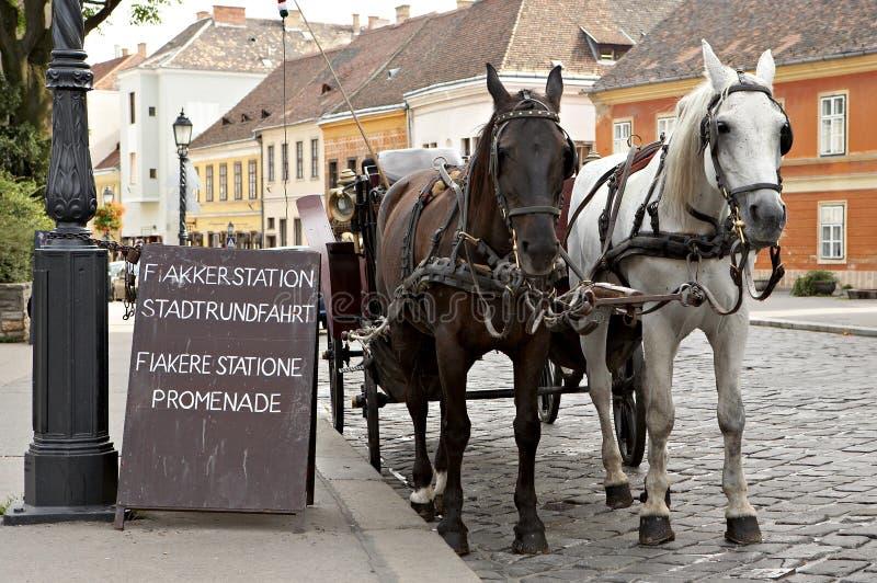 Paard-gedreven cabine. stock afbeelding