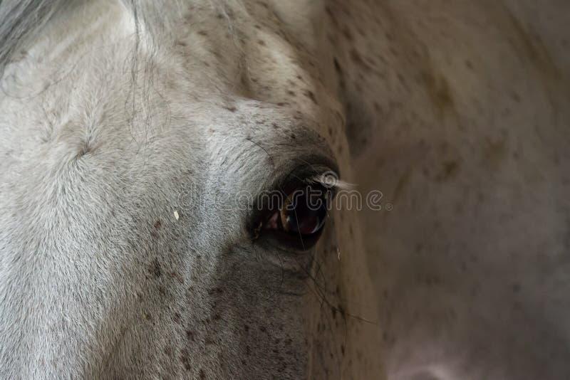 Paard headshot in ruiterclub, close-up, daglicht royalty-vrije stock afbeelding