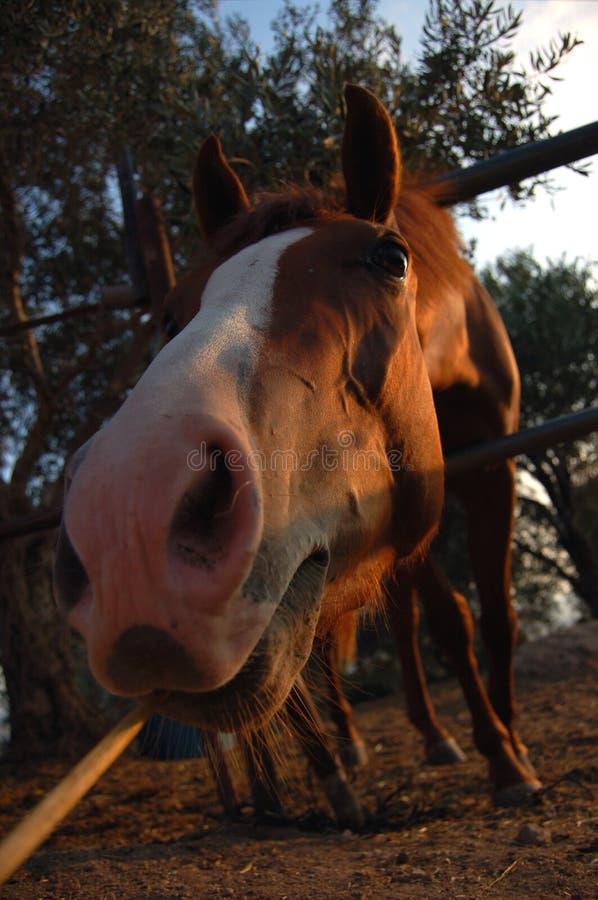 Paard het eten. stock afbeelding