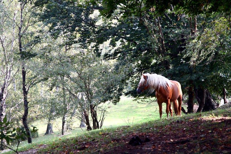 Paard in het hout royalty-vrije stock fotografie