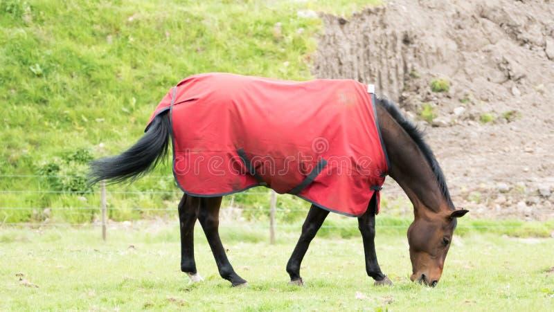Paard in het jasje stock foto's