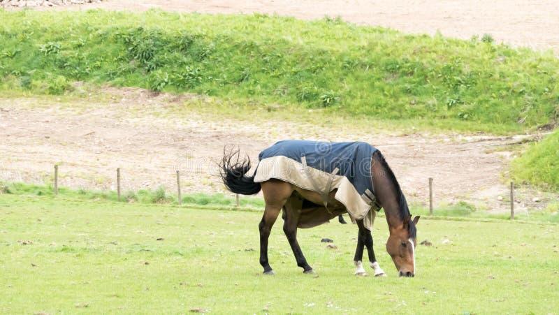 Paard in het jasje stock afbeelding