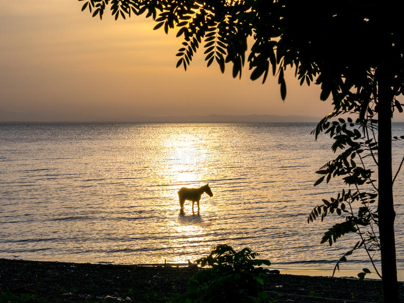 Paard in het Meer royalty-vrije stock fotografie