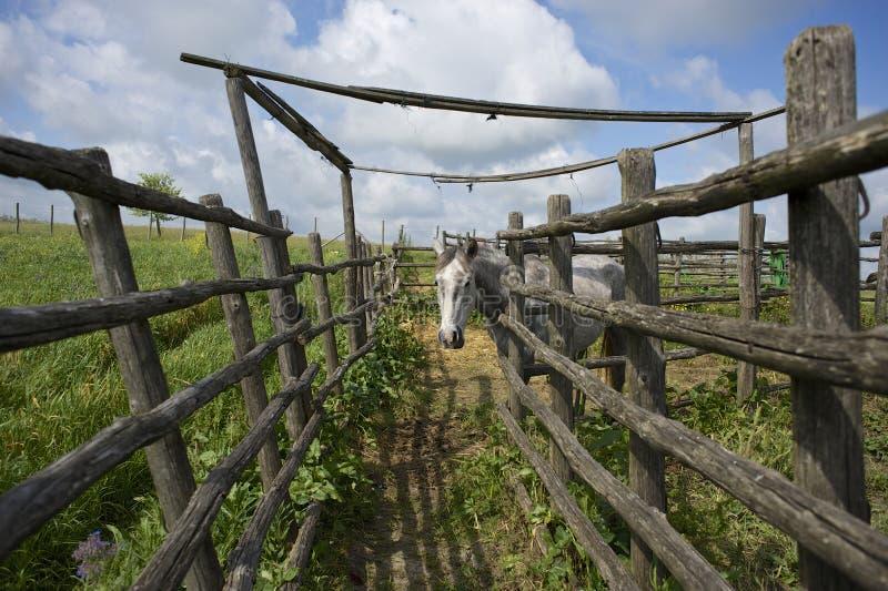 Paard in het Roman platteland stock afbeelding