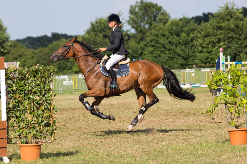 Paard het springen stock afbeeldingen