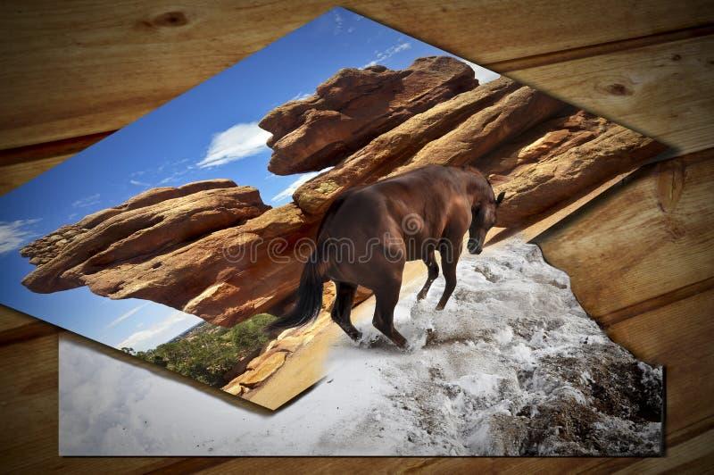 Paard het springen stock fotografie