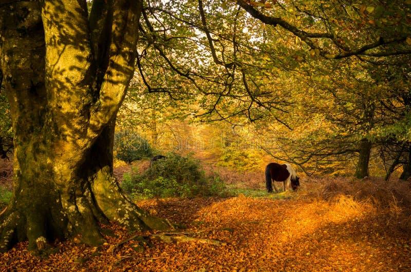Paard het weiden onder een boom royalty-vrije stock afbeeldingen