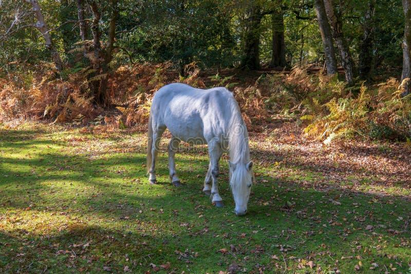 Paard het weiden onder een boom stock foto