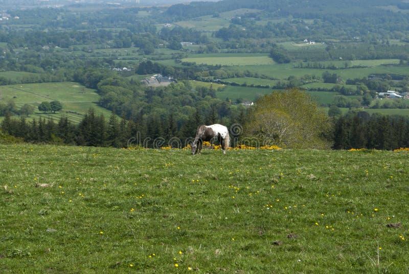 Paard het weiden op een gebied royalty-vrije stock afbeeldingen