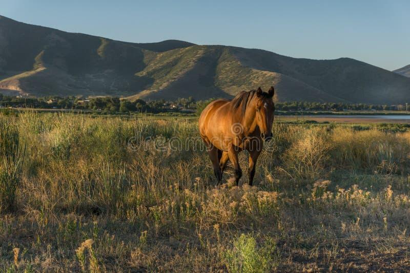 Paard in het weiland bij dageraad met achtergrond van bergen royalty-vrije stock foto's